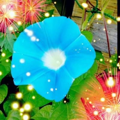 f:id:bluemoonbell:20130826174435j:image