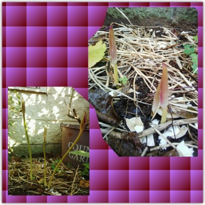 f:id:bluemoonbell:20130909090427j:image