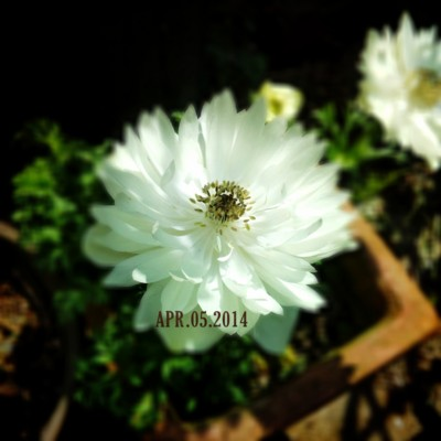 f:id:bluemoonbell:20140405202305j:image
