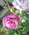 f:id:bluemoonbell:20140514070418j:image:medium:left