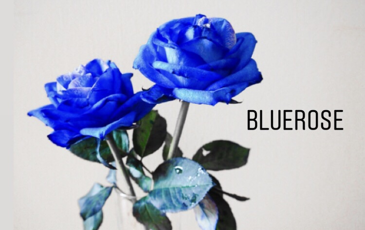 f:id:blueroseryugaku:20190625232642j:plain