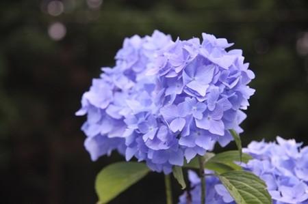 f:id:bluesapphire:20080721152942j:image