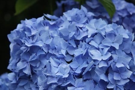 f:id:bluesapphire:20080721152943j:image