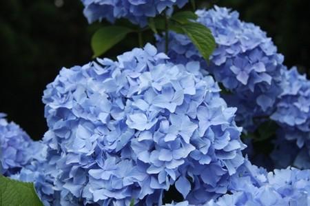 f:id:bluesapphire:20080721152944j:image