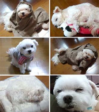 f:id:bobi-wan:20100429170730j:image