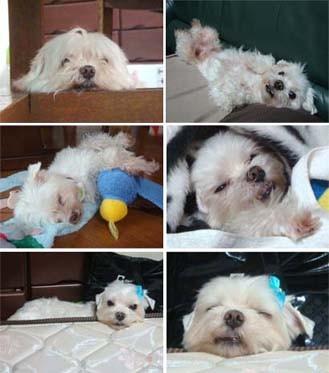 f:id:bobi-wan:20100429170802j:image