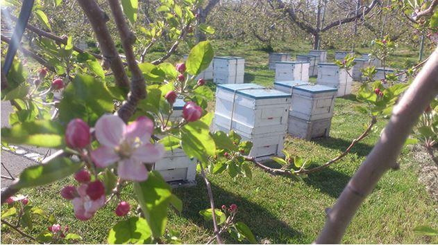 りんご園の ミツバチ巣箱 www.hana38kan.com より引用