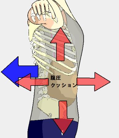 f:id:bodywise:20130222113014p:image