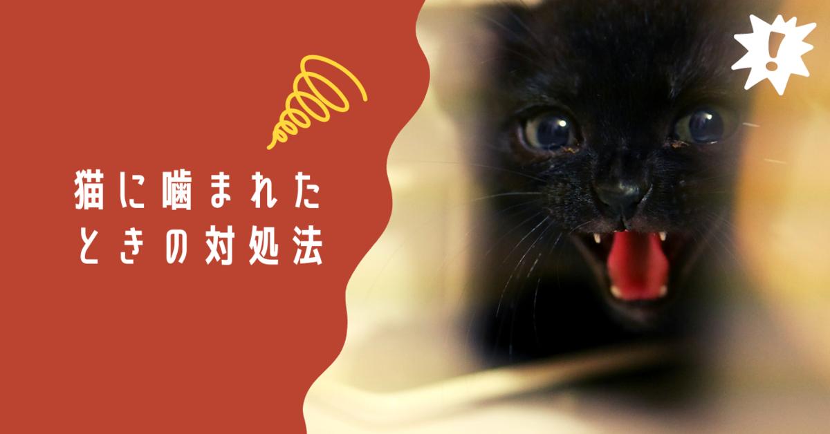 猫に噛まれた時の対処法