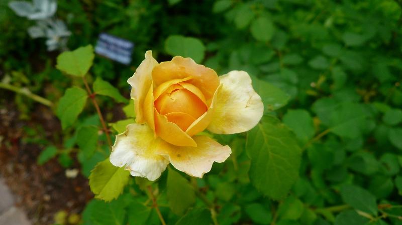 f:id:boianuf:20120612095611j:image