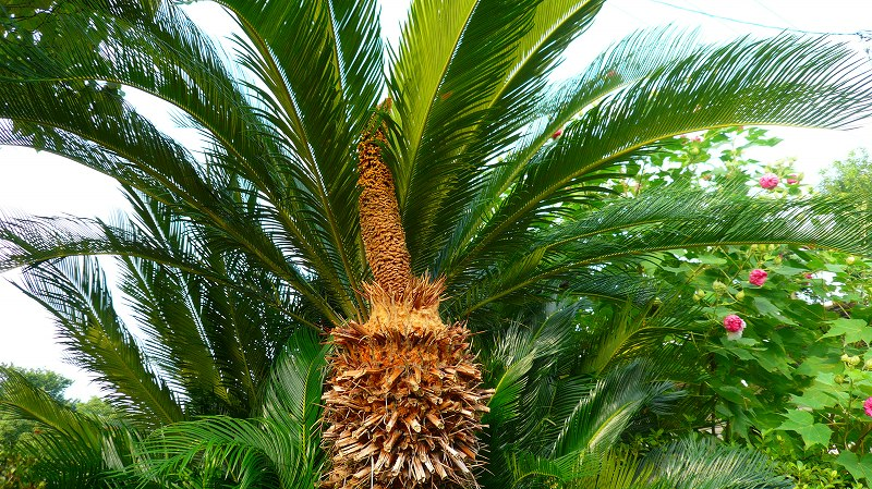 f:id:boianuf:20120920124021j:image