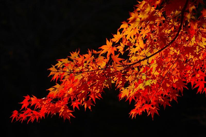 f:id:boianuf:20121111125729j:image