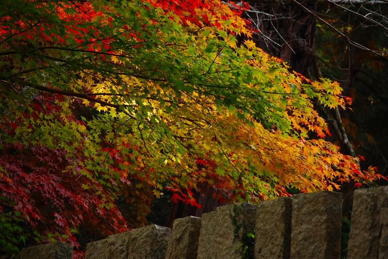 f:id:boianuf:20121112094200j:image