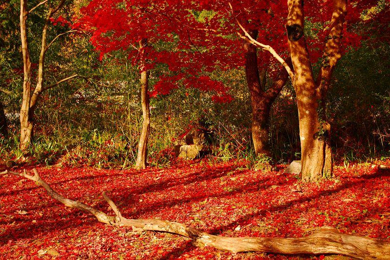 f:id:boianuf:20121124093106j:image