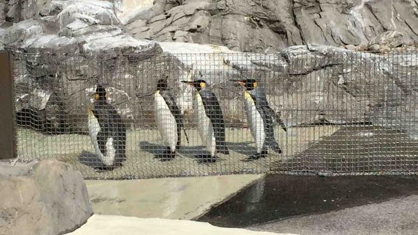 葛西臨海水族園 ペンギン