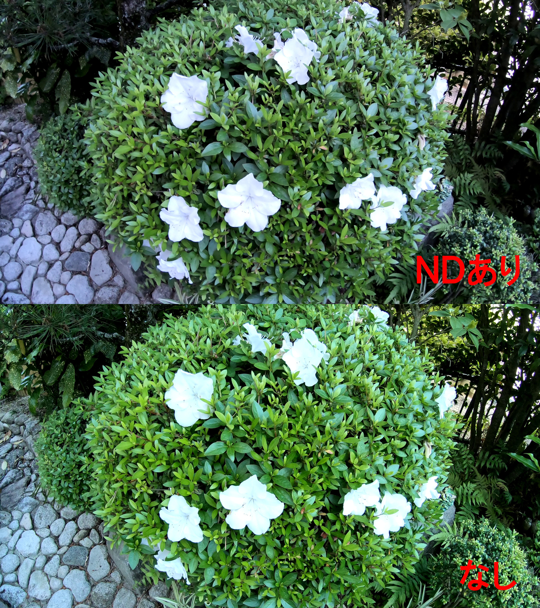 f:id:boku-neko:20190507195941j:plain