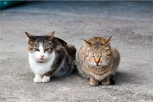 お上品に出迎えてくれた猫たち