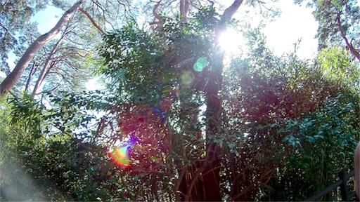 仙台の松島の木々の写真