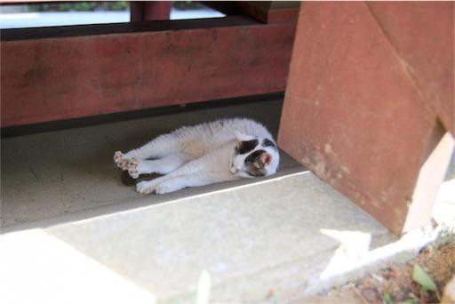 門のスキマで眠るねこ