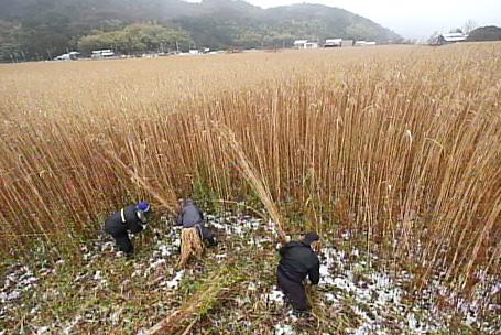 f:id:bokushita:20120223003451j:image:w360
