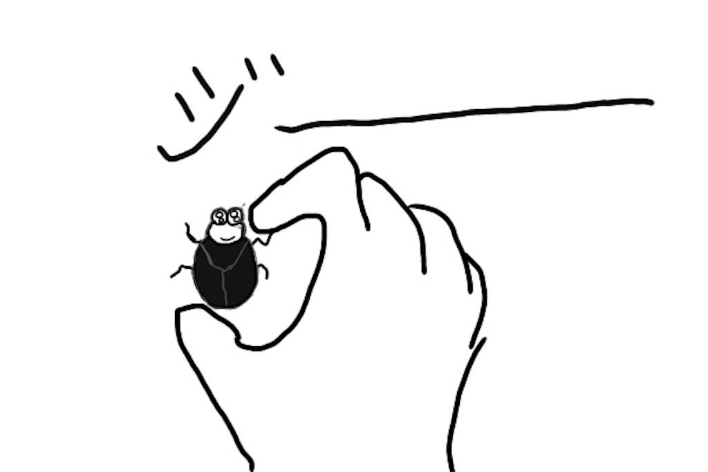 カツオブシムシのイラスト
