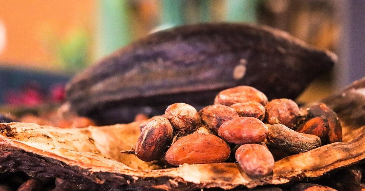カカオ 豆