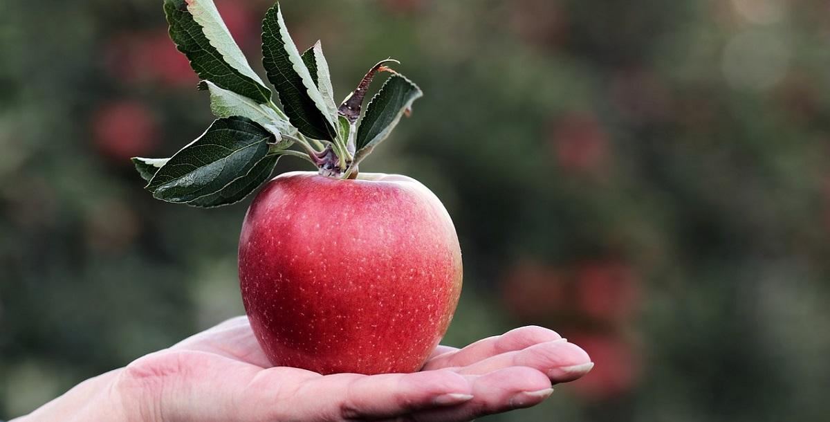 りんご品種