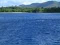 遠くで泳ぐイルカ