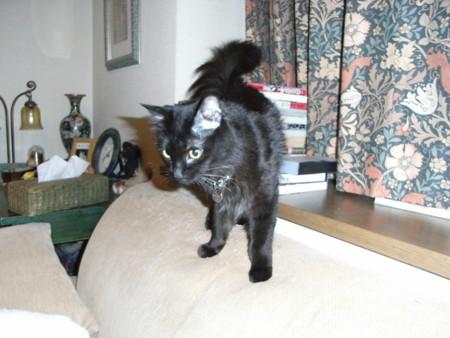 f:id:bonotake:20081027200857j:image
