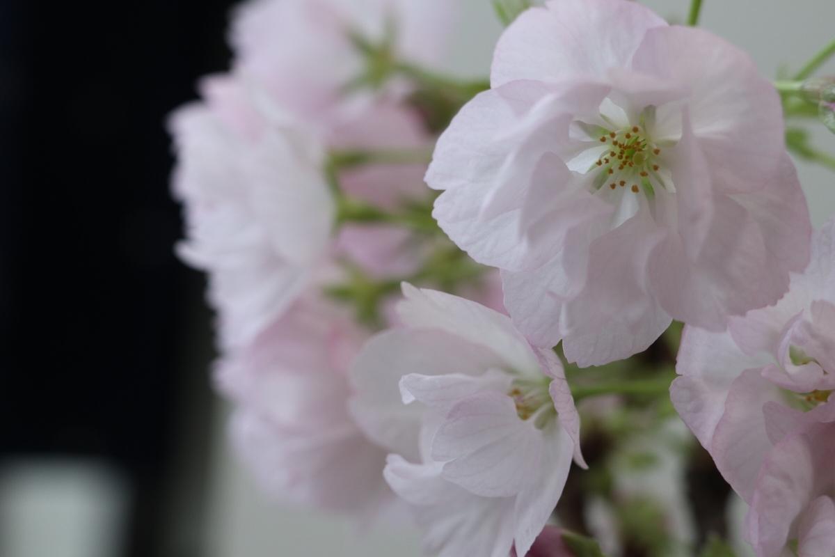f:id:bonsa1:20190518232121j:plain