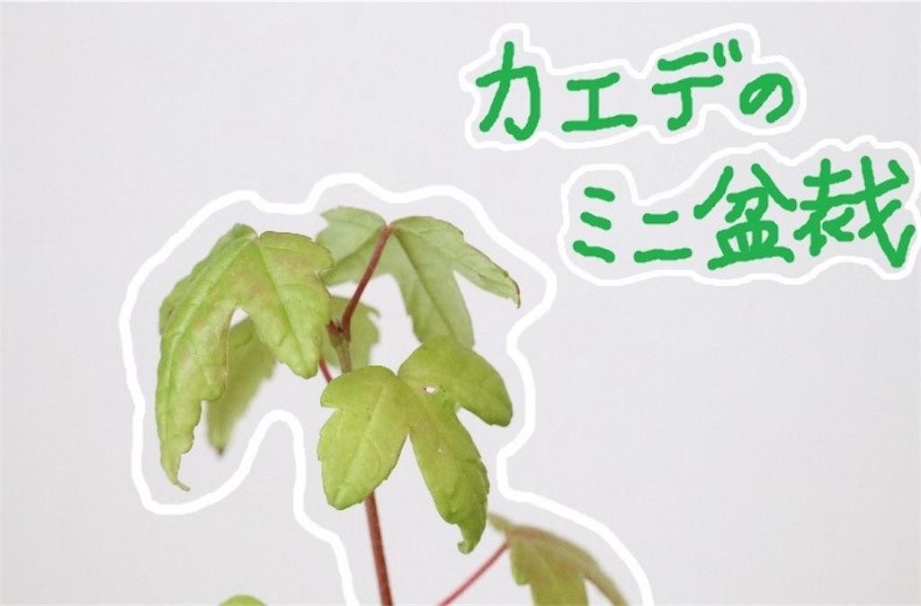 f:id:bonsa1:20190930125254j:image