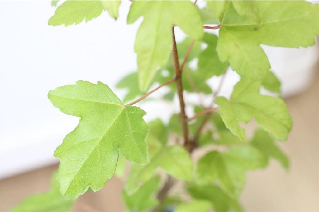 f:id:bonsa1:20190930130502j:image