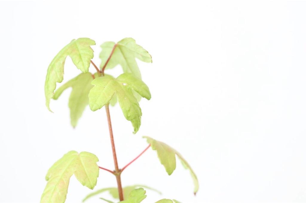 f:id:bonsa1:20190930130505j:image