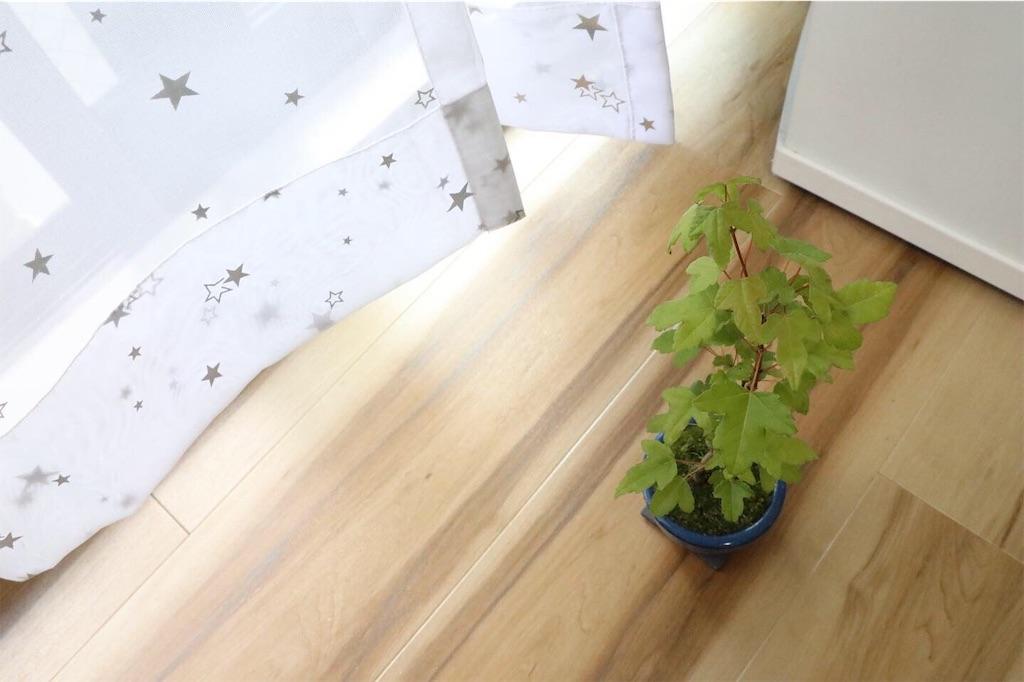 f:id:bonsa1:20190930130508j:image