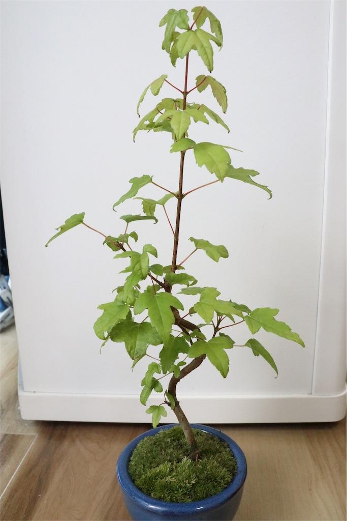 f:id:bonsa1:20190930130756j:image