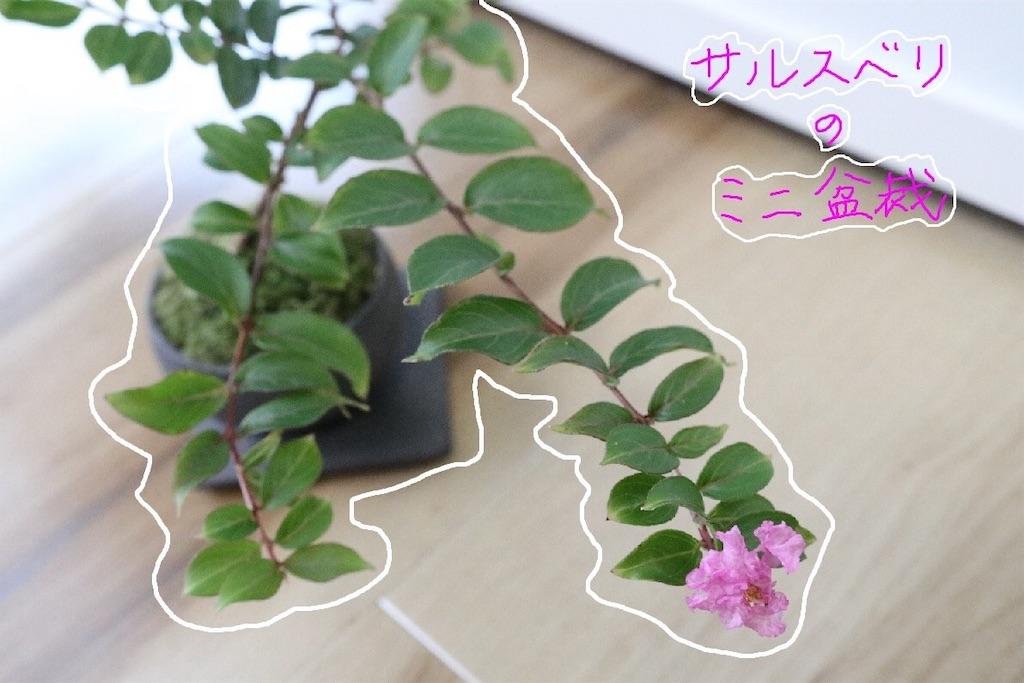 f:id:bonsa1:20191004170759j:image