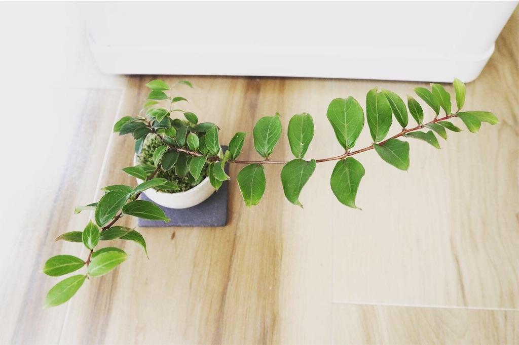 f:id:bonsa1:20191004171620j:image