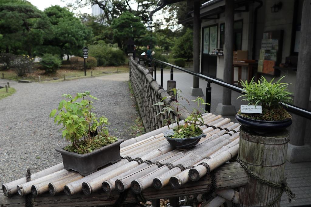 f:id:bonsa1:20191015213607j:image