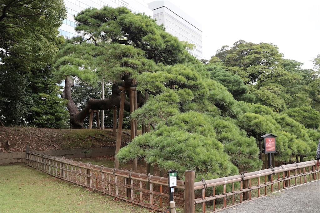 f:id:bonsa1:20191015214218j:image