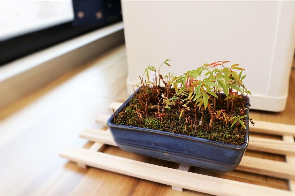 f:id:bonsa1:20191115122426j:image