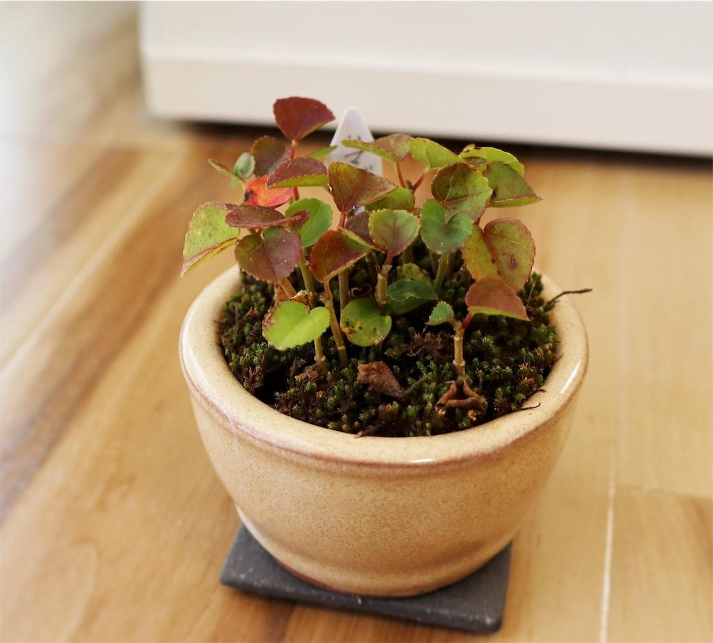 f:id:bonsa1:20191115122505j:image