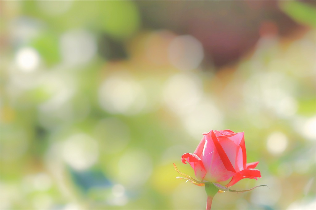 f:id:bonsa1:20191121235506j:image
