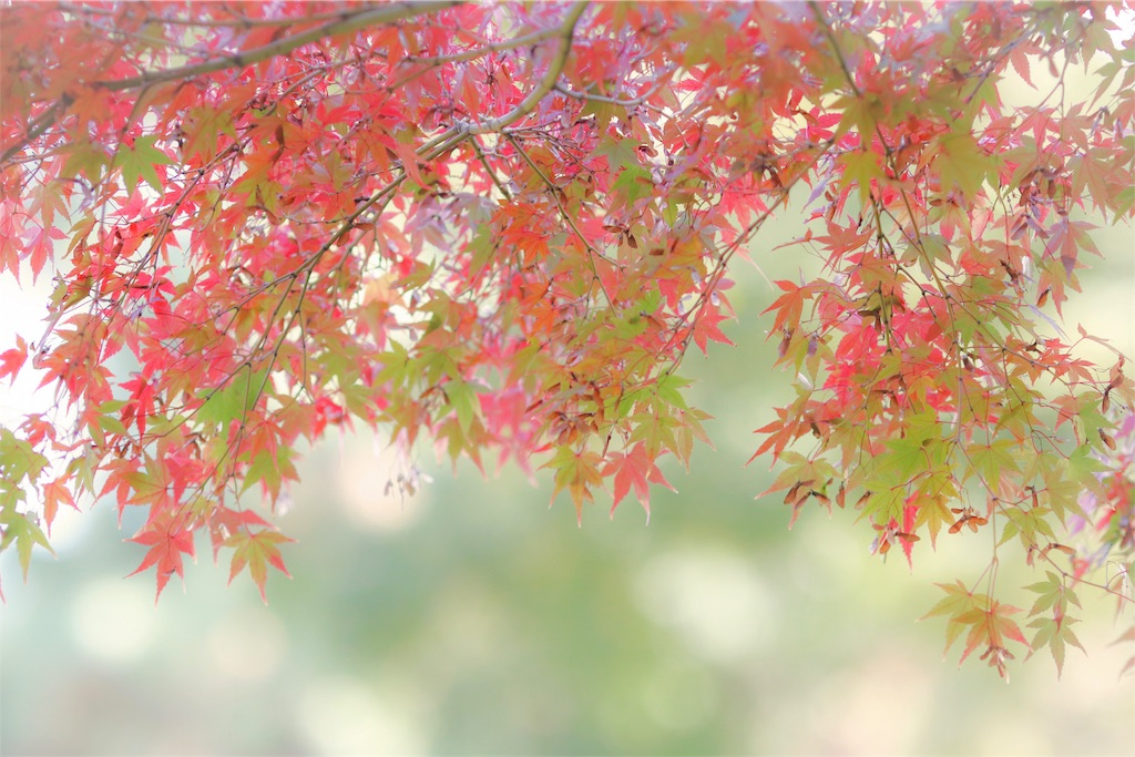 f:id:bonsa1:20191126210409j:image