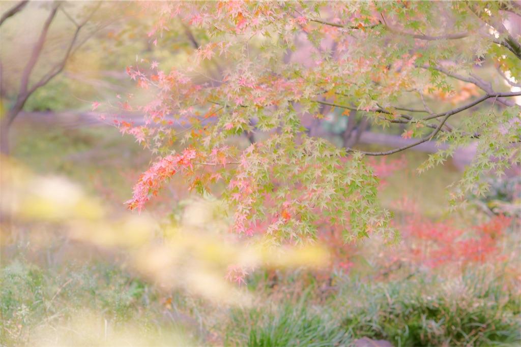 f:id:bonsa1:20191204144308j:image