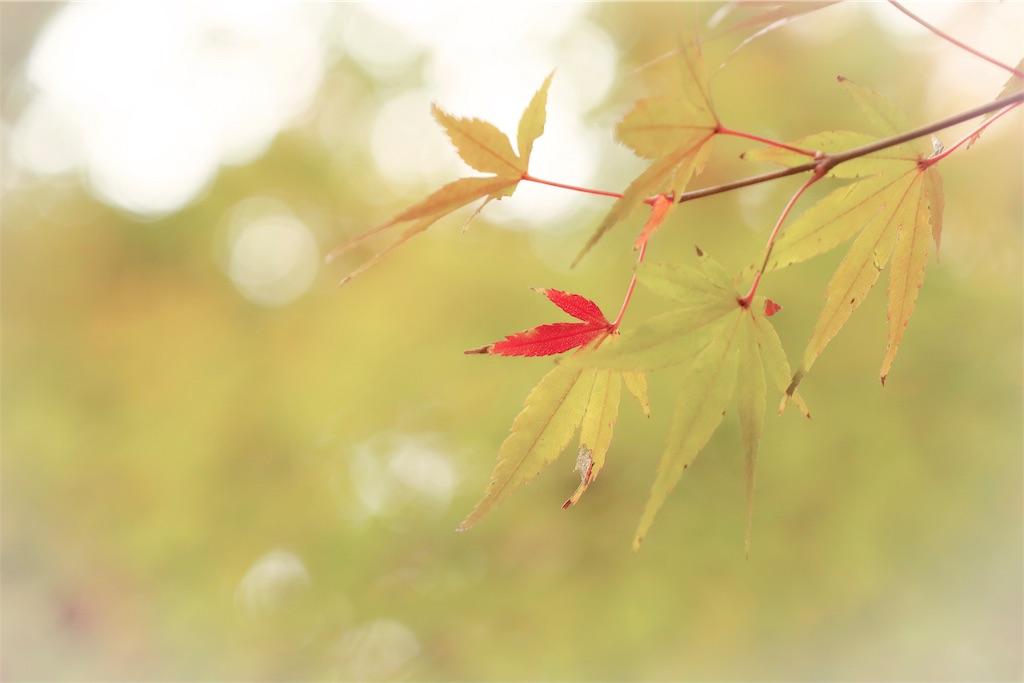 f:id:bonsa1:20191207094438j:image