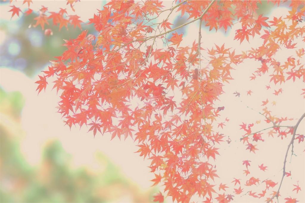 f:id:bonsa1:20191207094510j:image