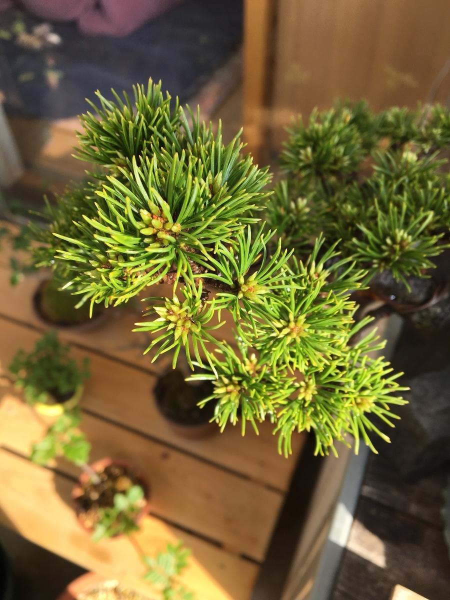 f:id:bonsaibums:20190701135050j:plain