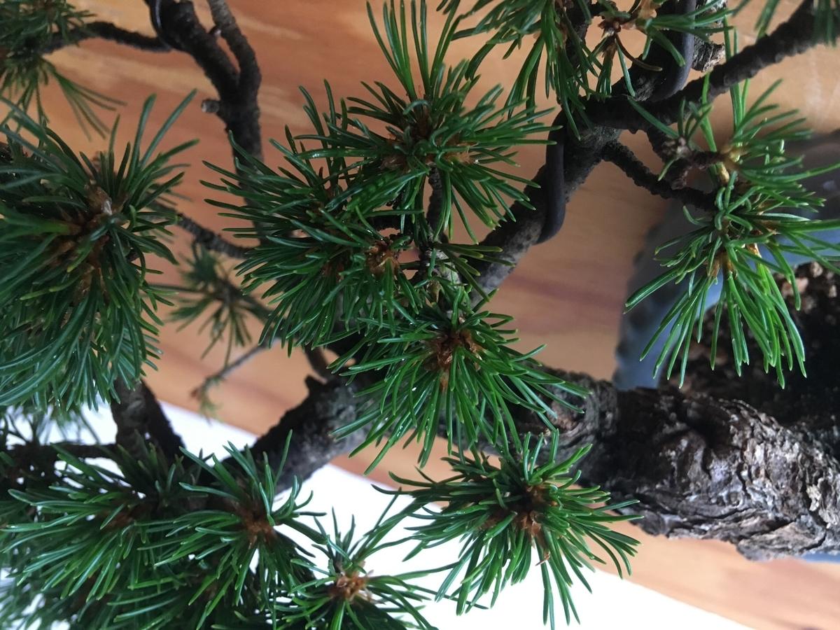 f:id:bonsaibums:20190701182000j:plain