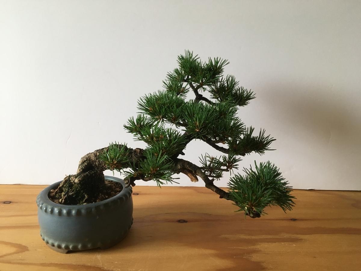 f:id:bonsaibums:20190701182012j:plain