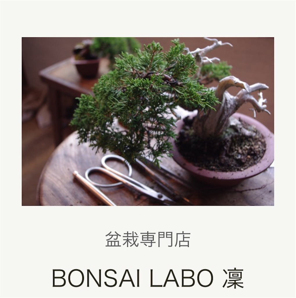 f:id:bonsailabo-rin:20170228122758j:image